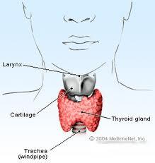 gebelik ve tiroid hastalıkları guatr