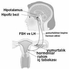 Süt Hormonu Fazlalığı (Hiperprolaktinemi)